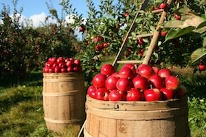 Äpfel nachhaltig